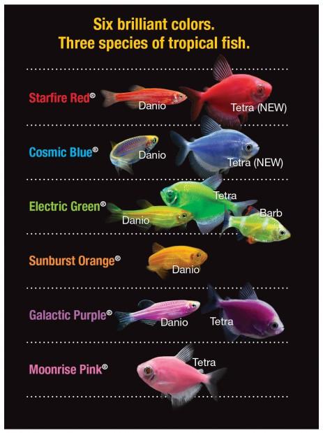 Glofish varieties