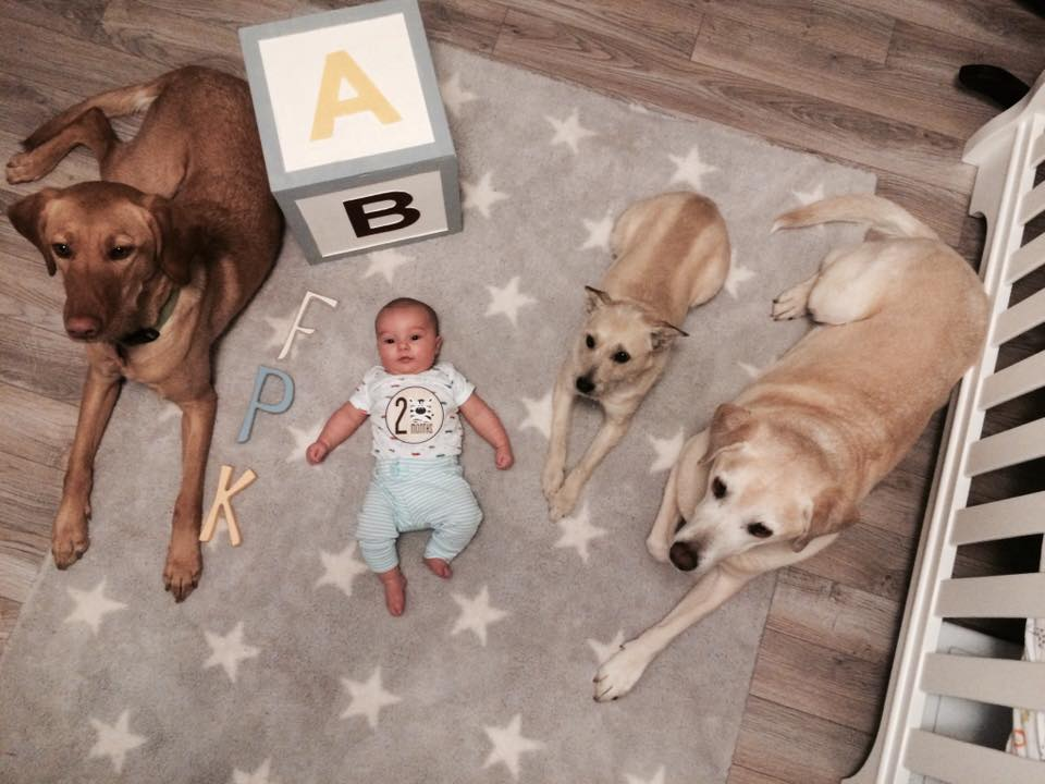 cute dogs with baby