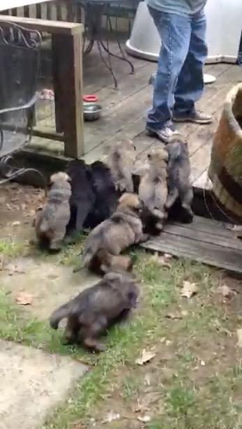 Back yard doggies