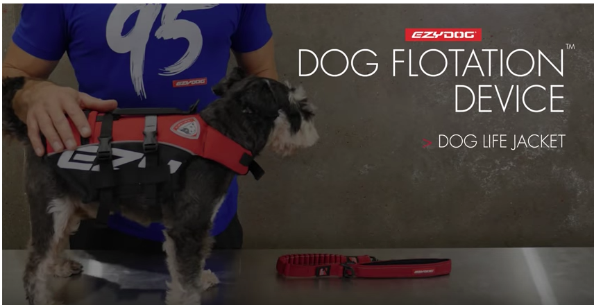 EZY Dog flotation device