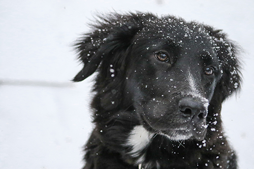 Dog, cold, snow, winter