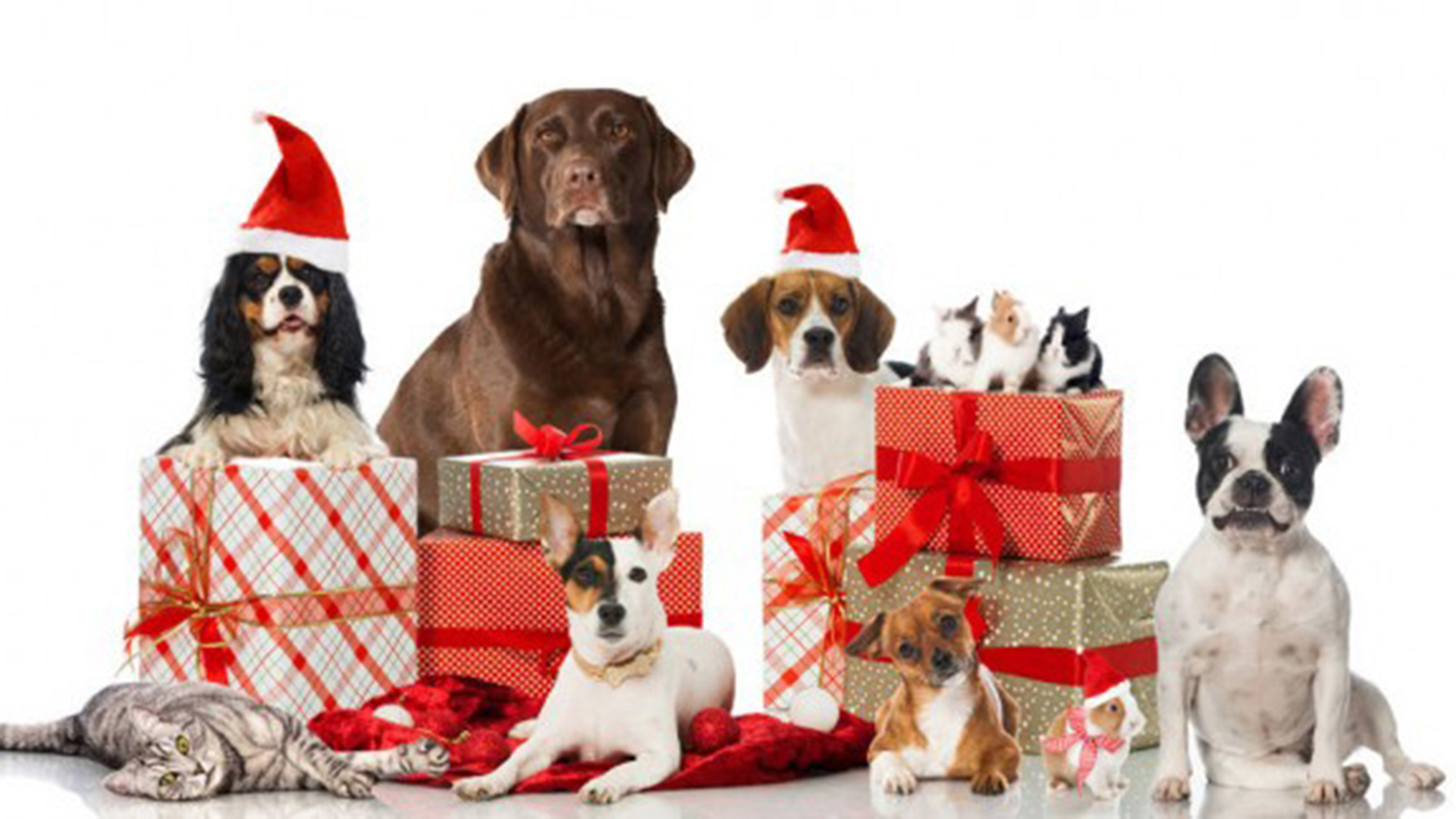 christmas gifts for pets 624x324 j m aquatics and pet center