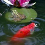Fall Maintenance for OUtdoor ponds