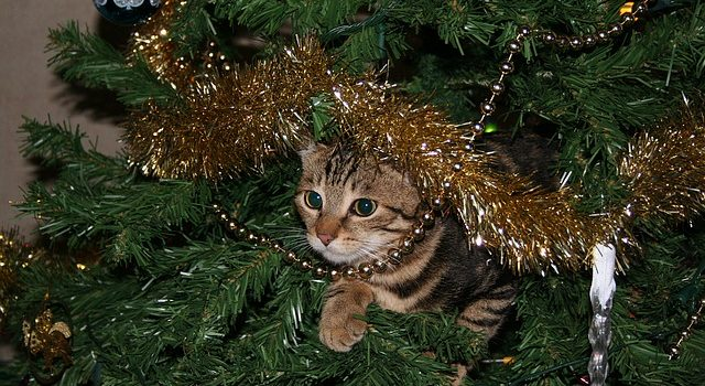 Holiday pet safety tips
