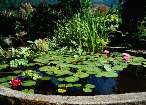 Building a small pond