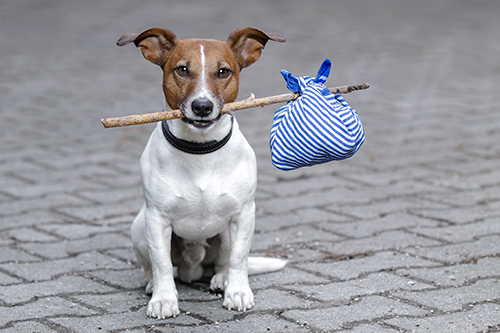 Dog with stick, lost dog
