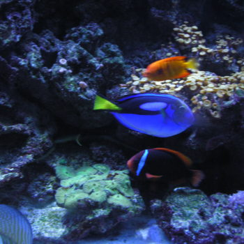 jm aquatics and pet center images