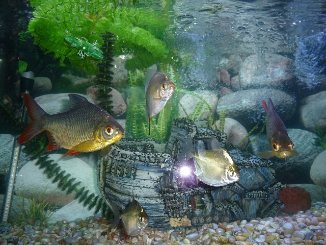 aquarium, fish, sump pump
