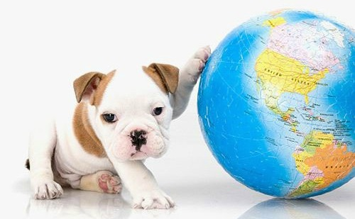 Puppy and Earth