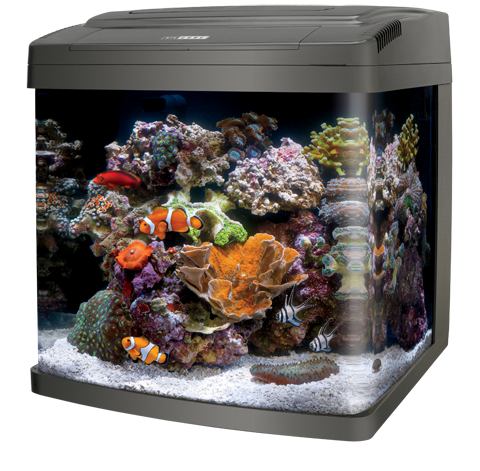 Biocube aquariums