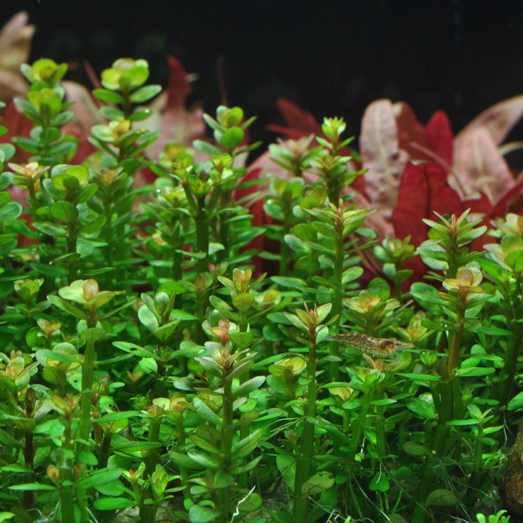 Tropical Fish and Live Aquatic Plants in Grand Junction