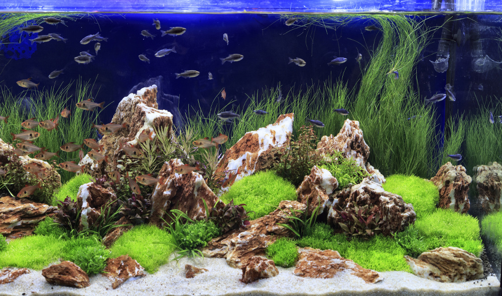 how to set up your freshwater aquarium planted tank