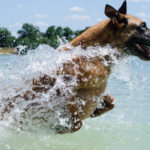 Dogs and Water Safety