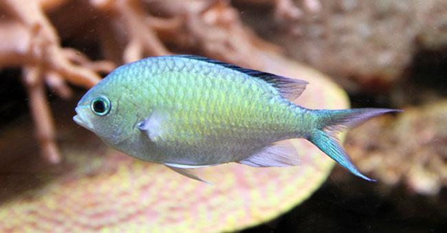 Tropical Fish and Live Aquatic Plants