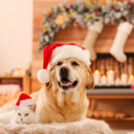 Keep your pets safe during the holidays