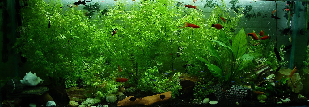 planted tank example