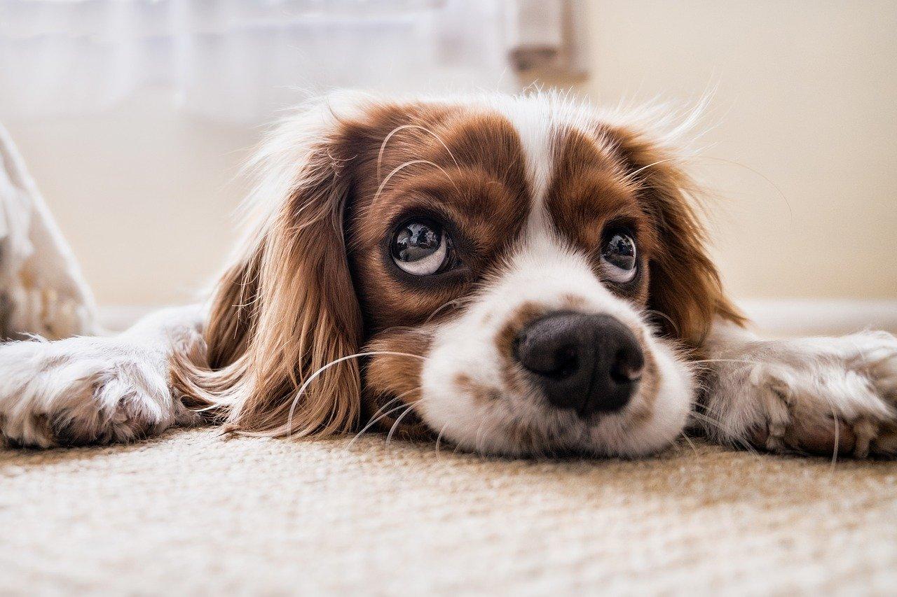 Should I get a pet sitter J&M Aquatics and Pet Center Grand JUnction Pet Store
