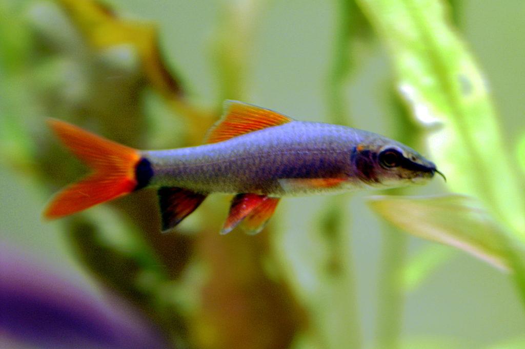 Best cleaner fish