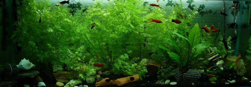 your first aquarium J&M Aquatics and Pet Center