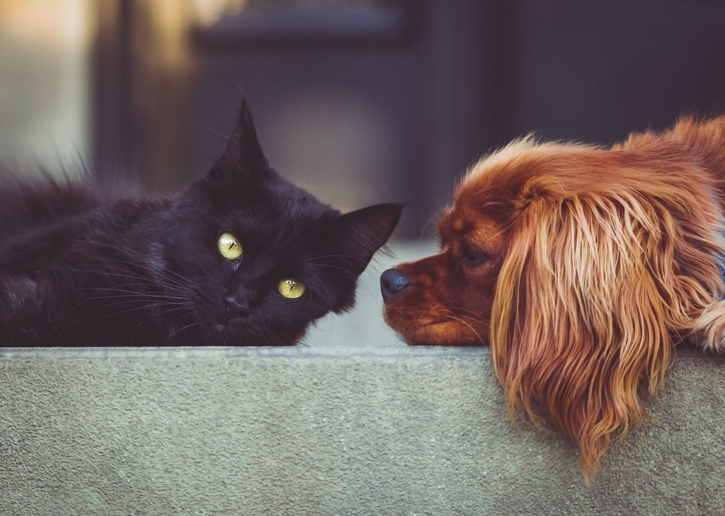 Signs of Stress in Pets