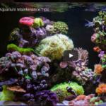 Reef Aquarium Set Up and Maintenance
