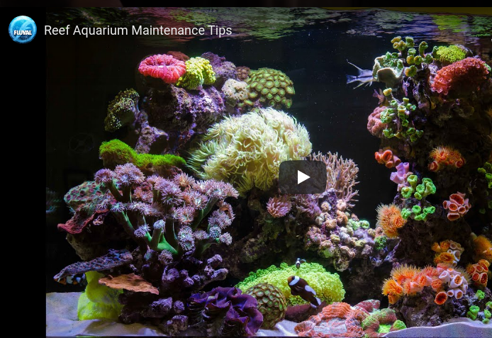 Reef Aquarium Set Up and Maintenance