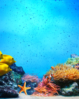 Underwater scene. Fall cleaning checklist for your aquarium