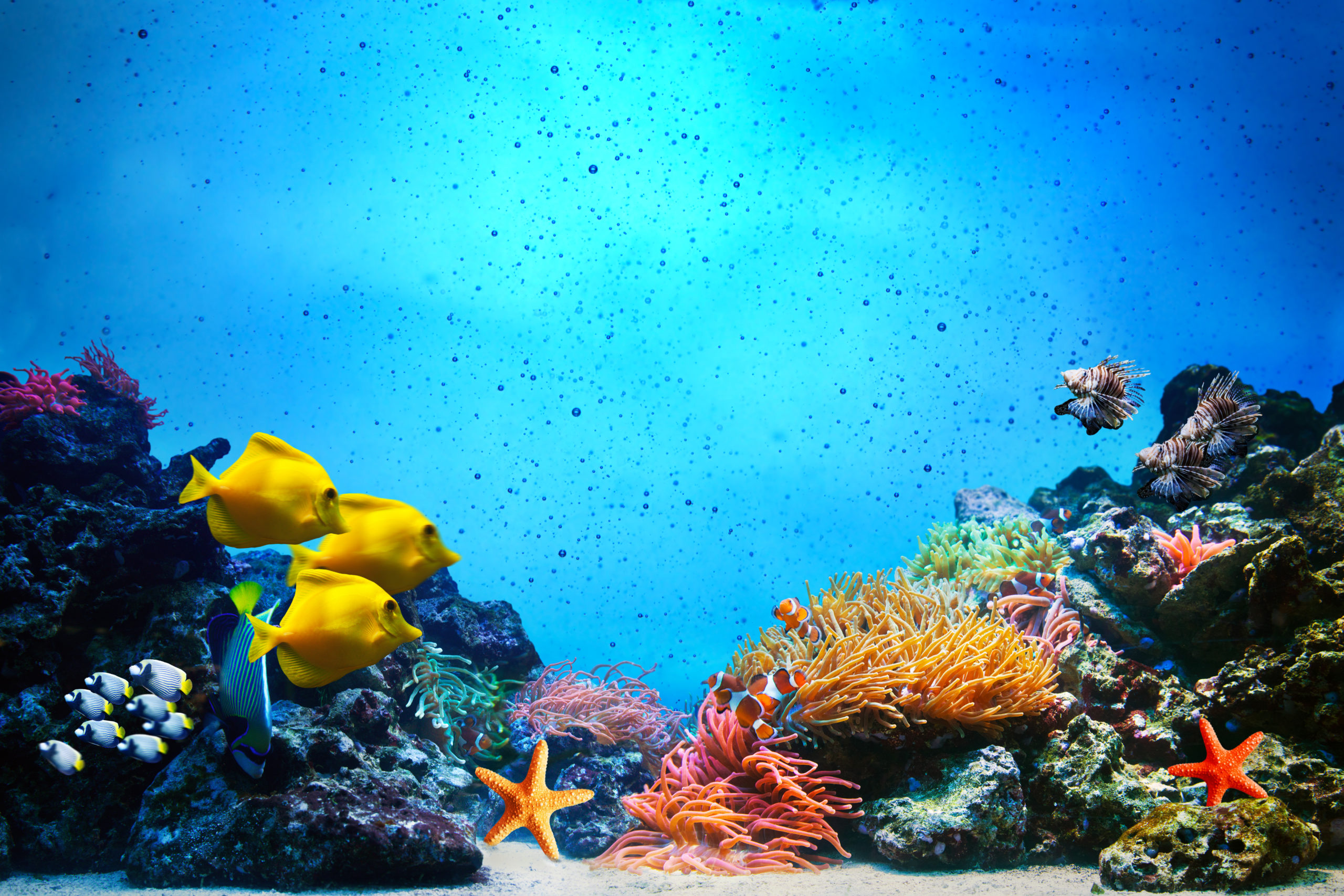 Underwater scene. Fall cleaning checklist for your aquarium