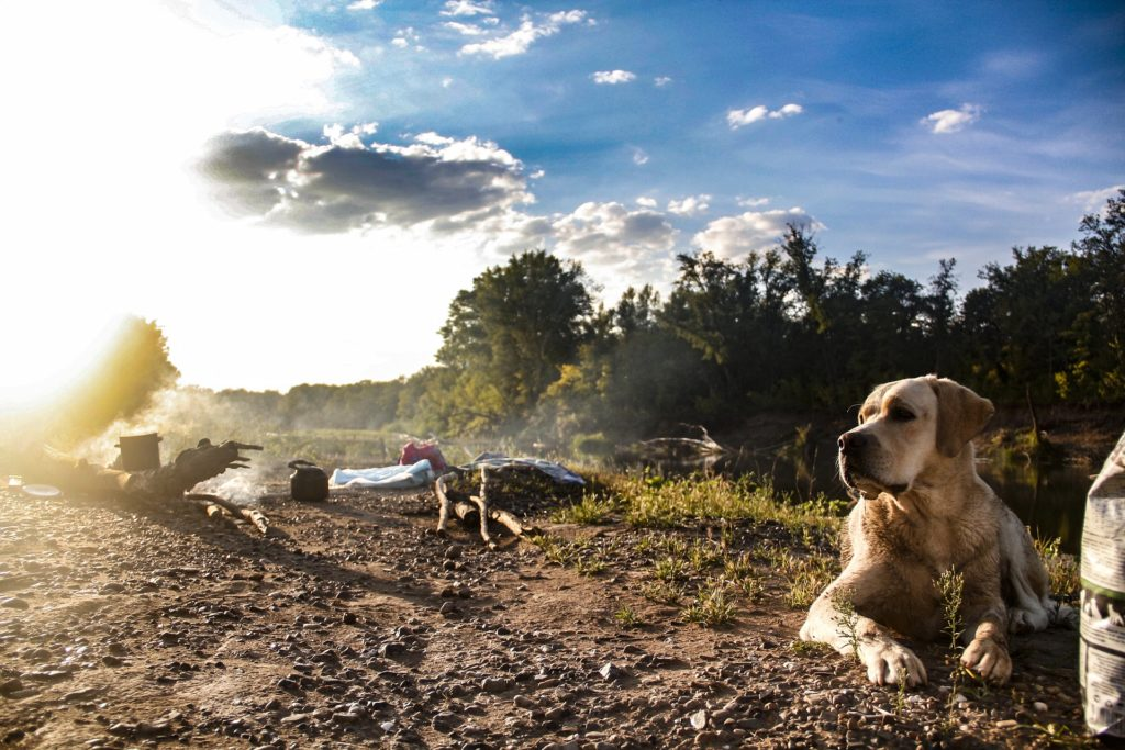 Fall Hikes with Dogs