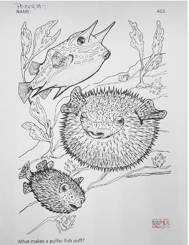 puffer fish for coloring