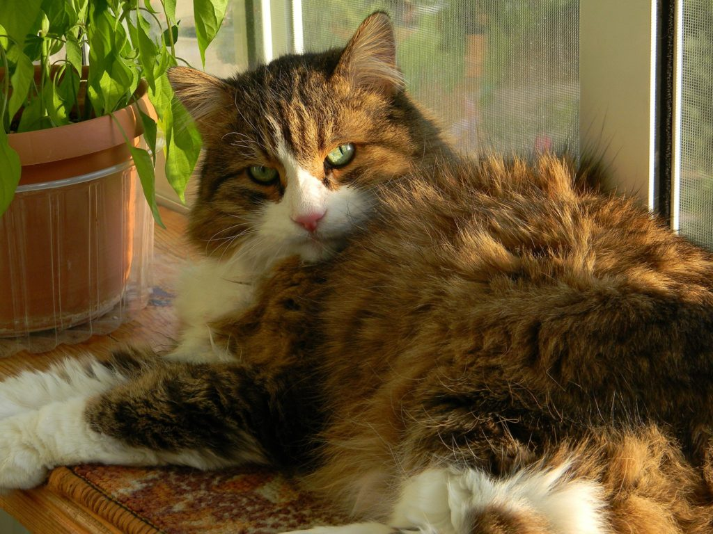 Foods that are toxic to cats