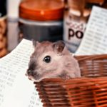 Five reasons to choose small pet